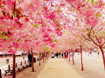 日本留学只能二选一?还可以去日本专门学校!
