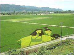 日本留学农业学专业哪些大学好?选这些日本大学就对了!