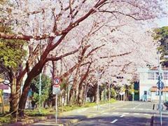 日本留学哪些专业最好找工作?日本读研就业就选这些!