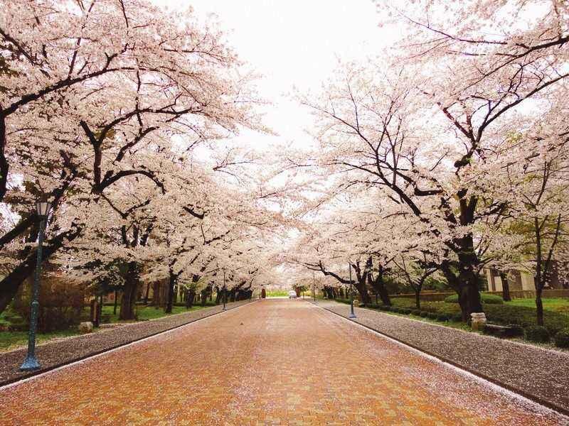 日本研究生考试时间是几月份?考试条件有哪些?