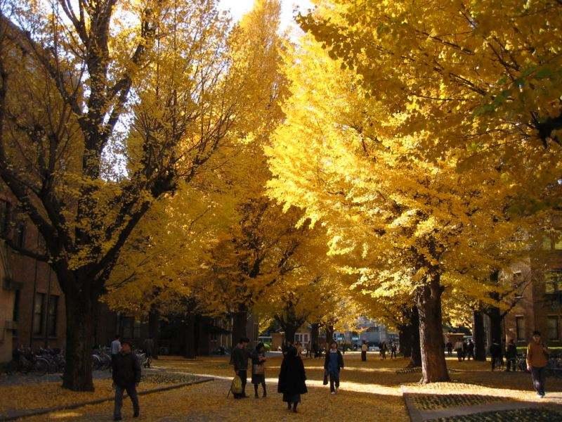 东京大学学费多少钱?(日本留学)