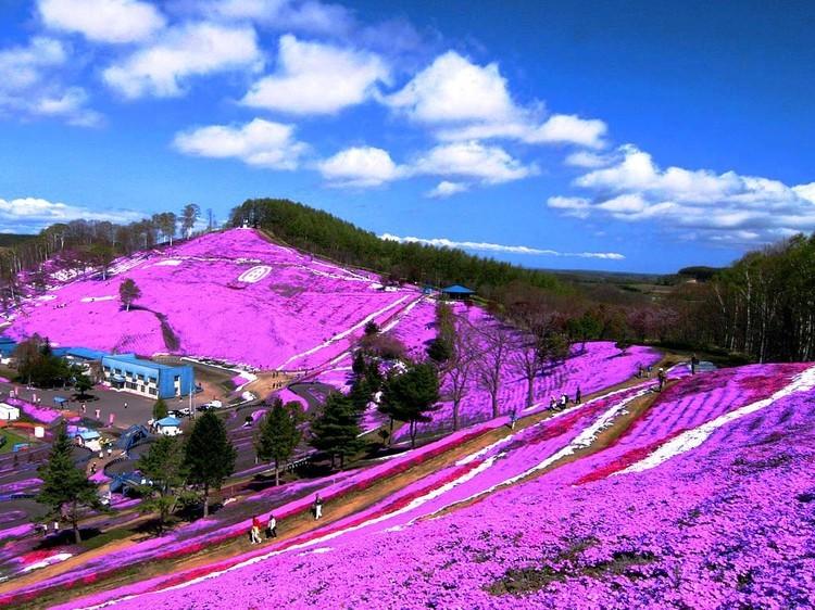 值得游览的北海道旅游景点丨日本留学生活