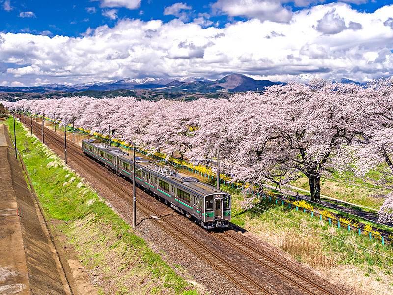 宫城县有哪些旅游景点丨日本留学生活