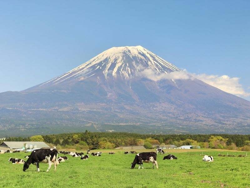 日本留学五大热门文科专业盘点