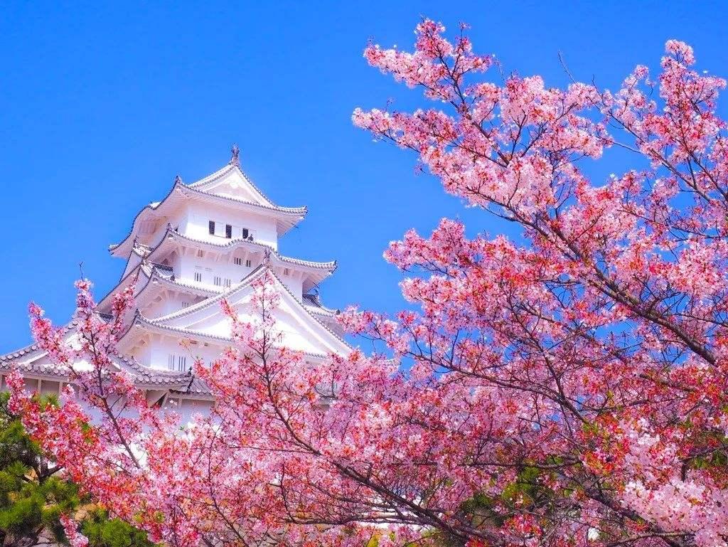 日本留学:承认托福还是托业?