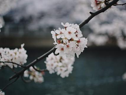 去日本出国留学的条件有哪些?