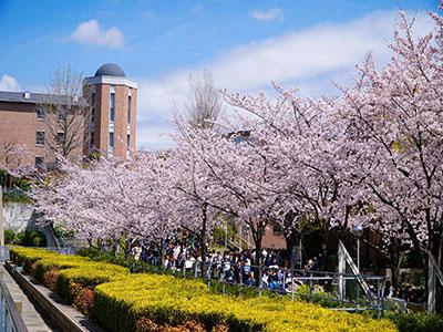日本大学直申的学校都有哪些?(明细)