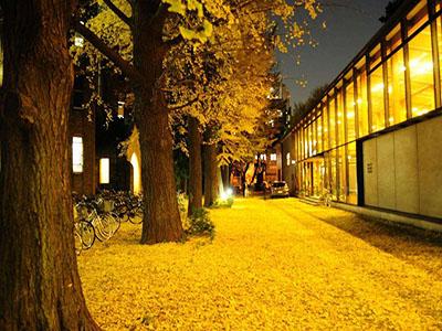 东京大学地址在哪?(日本留学)
