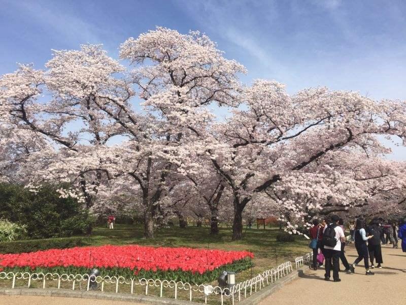 京都市立艺术大学在日本怎么样?(日本留学)
