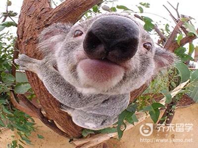 去澳洲留学的条件有哪些,去澳洲留学的条件