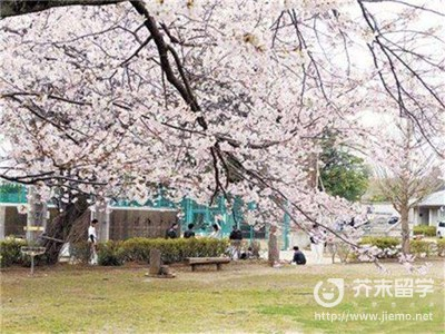 申请日本留学