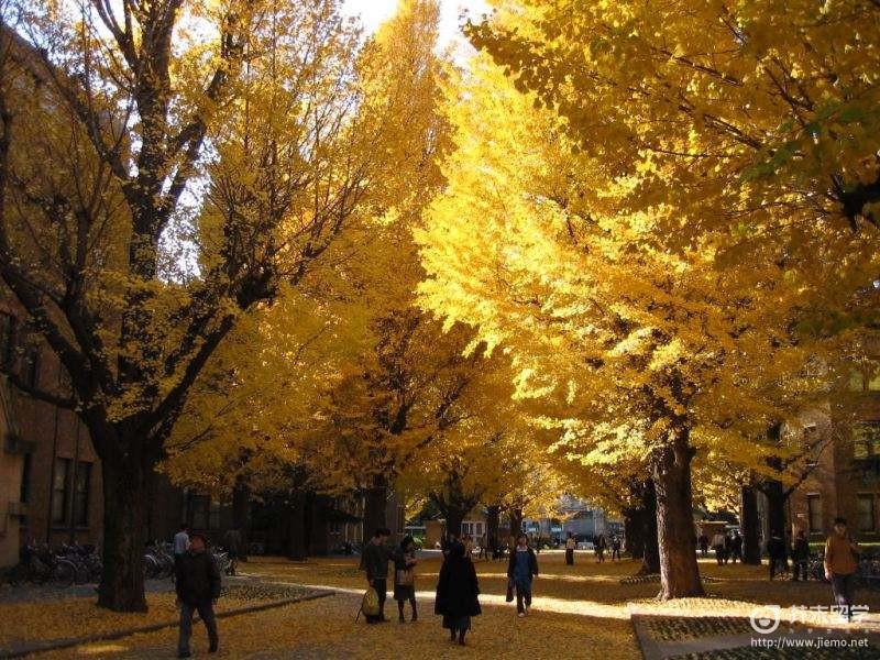 东京大学回国认可度
