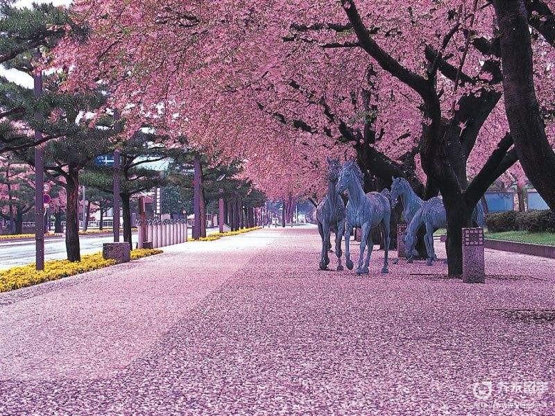 日本歌曲櫻花