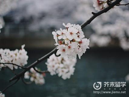去日本出国留学的条件