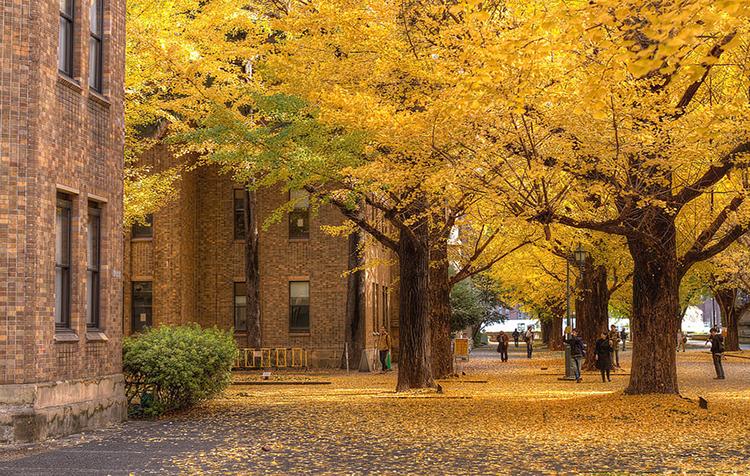 日本留学大学院研究生课程申请服务(在日)