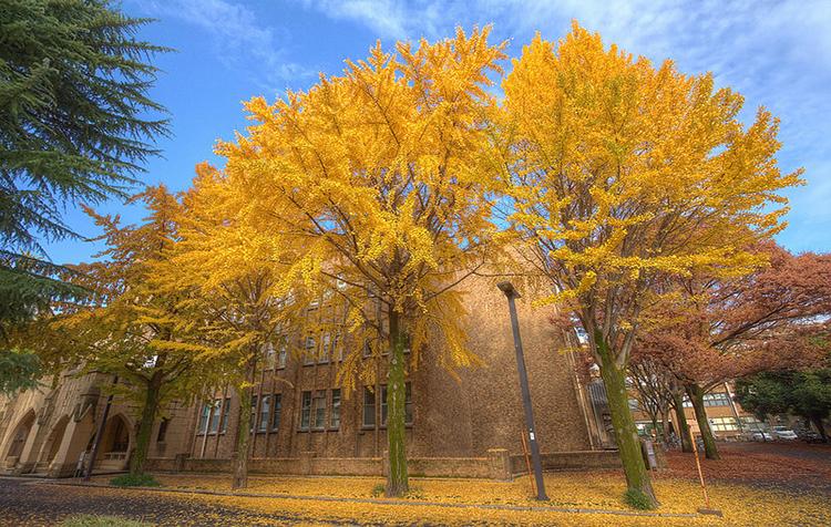 日本留学本科SGU项目申请服务